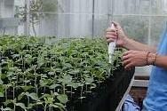 soybean biodiversity